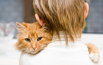 Animals___Cats_Red_Cat_hugging_the_owner_044684_