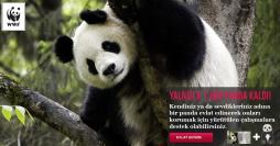 WWF Türkiye