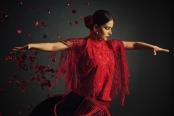 Flamenco-Asime-fotograf